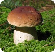 Сколько времени варить грибы
